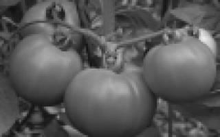 Помидоры крупные лучшие сорта для открытого грунта