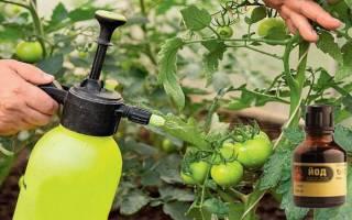 Как опрыскивать помидоры йодом