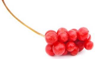 Ягоды лимонника польза и вред как приготовить противопоказания