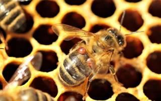 Бипин т (1 мл) инструкция по применению для пчел как развести отзывы чем отличается от бипина