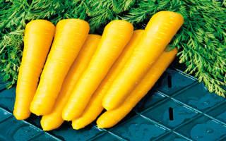 Желтая морковь описание сорта с фото