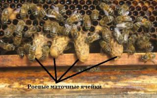 Как пчелы делают соты
