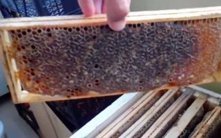 Улей удав пчеловождение отзывы