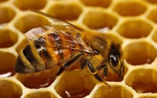 Изатизон инструкция по применению для пчел