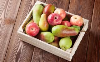 Самогон из груш рецепты браги в домашних условиях без дрожжей с яблоками
