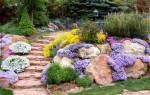 Неприхотливые низкорослые многолетние цветы цветущие все лето фото