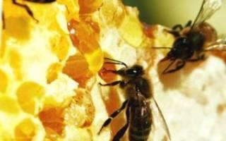 Лечение пчелами польза и вред точки ужаливания отзывы