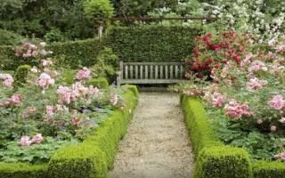 Кустовые розы сорта + фото с названиями