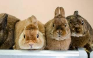 Декоративные кролики породы с фото