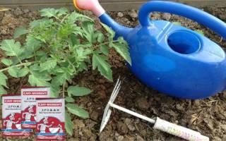 Дрожжевая подкормка для огурцов и помидоров