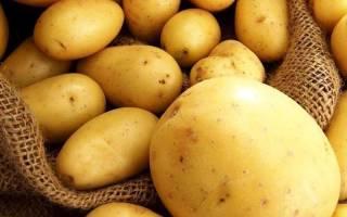 Картофель ривьера описание сорта фото отзывы
