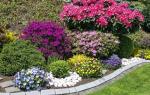 Многолетники цветущие все лето + фото с названиями