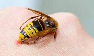 Как отпугнуть пчел спрей ультразвуковой отпугиватель дихлофос какого запаха боятся репелленты