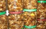 Засолка опят горячим способом рецепты на зиму в банках в кастрюле с уксусом без уксуса
