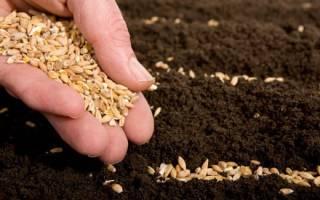 Ремонтантная клубника выращивание и уход обрезка + видео