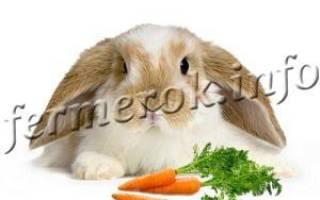 Кролик вислоухий баран фото описание породы