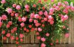Вьющиеся многолетники для сада + фото и названия