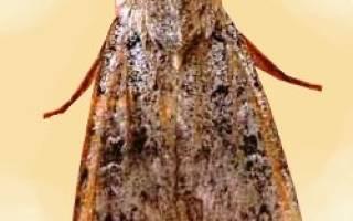 Враги пчел муравьи мыши как бороться с паразитами