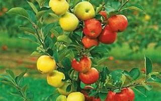 Весенняя прививка плодовых деревьев лучшие способы сроки