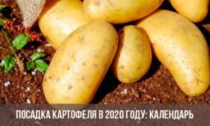 Благоприятные дни посадки картофеля в мае2020 года
