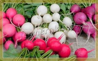 Лучшие сорта томатов черри + описание с фото