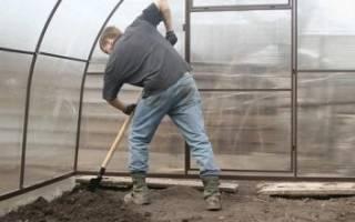 Как избавиться от белокрылки в теплице осенью