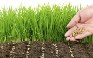 Чем засеять огород чтобы не росли сорняки
