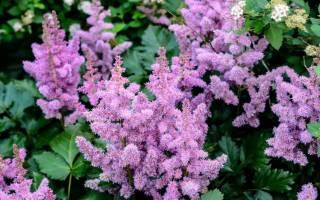 Какие многолетние цветы посадить осенью