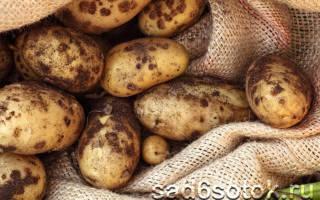 Парша картофеля методы борьбы фото описание и лечение
