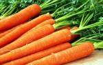 Лучшие сорта моркови для хранения зимой описание отзывы