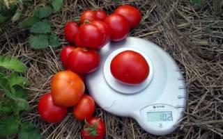 Ультраскороспелые сорта томатов описание выращивание и уход