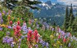 Медонос ценные медоносные травы для пчел с фото и названиями многолетние однолетние высеваемые специально