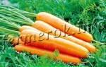 Морковь королева осени описание фото отзывы