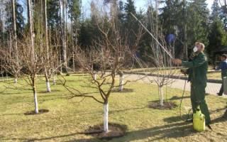 Чем обработать яблоню осенью от болезней