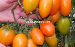 Томат южный загар характеристика и описание сорта