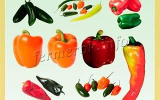 Лучшие сорта перца для теплицыс описанием и фото