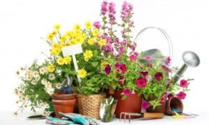 Календарь посадки цветов на 2020 год