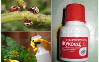 Жукоед от колорадского жука отзывы инструкция по применению