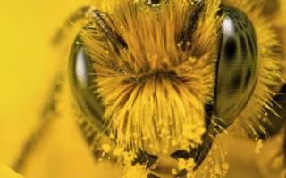 Кас 81 для пчел рецепт лекарства