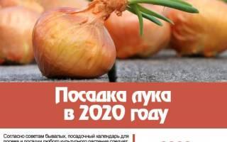 Когда сажать лук по лунному календарю в 2020 году