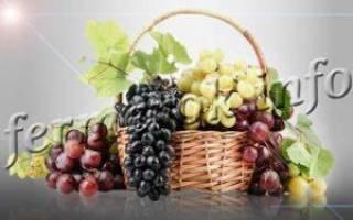 Виноград восторг описание сорта фото отзывы
