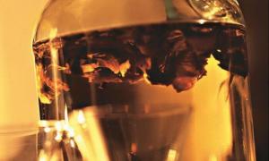 Коньяк на ореховых перегородках грецкого ореха рецепты