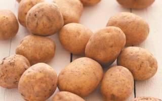 Вредители картофеля фото описание и лечение