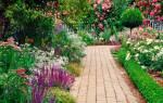 Высокие многолетники для сада с описанием и фото