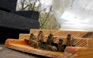 Поилка для пчел фото из пластиковой бутылки вакуумная