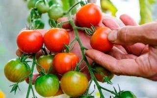 Томаты для ростовской области семена лучшие сорта
