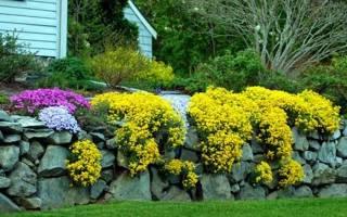 Желтые цветымноголетники фото и названия