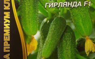 Уральская селекция огурцов