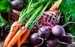 Когда убирать морковь и свеклу