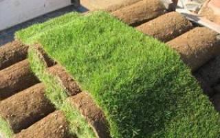 Рулонный газон виды преимущества способы укладки